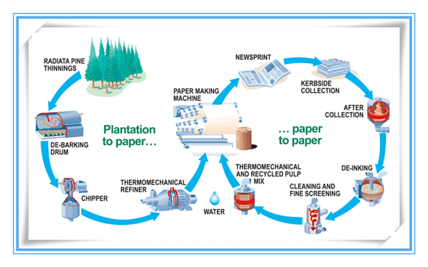 toilet paper making process